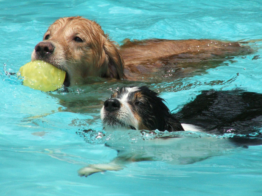More Swimming Dogs Dogs On The Run Dot Net