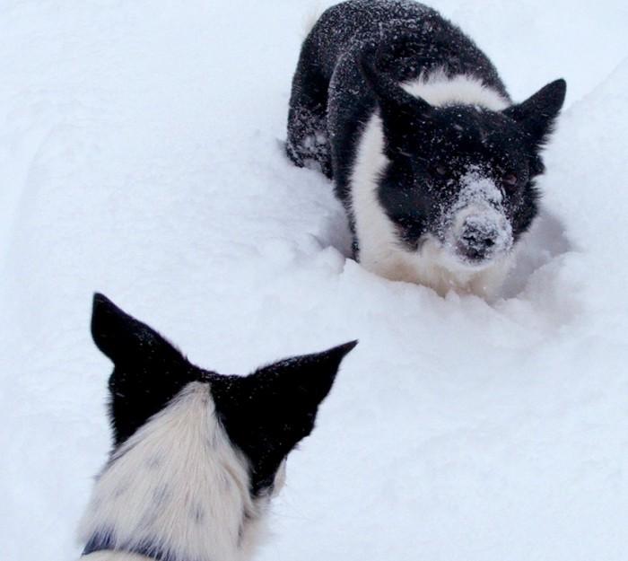 Jolt loves his snow