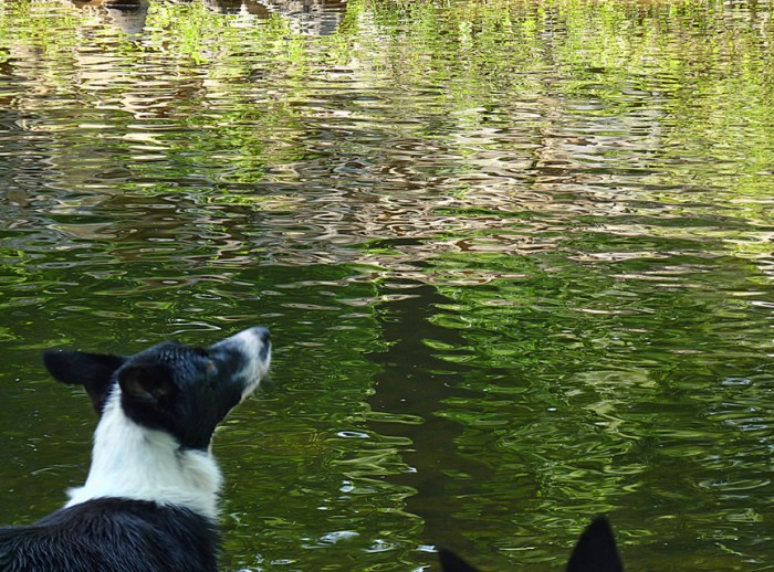 Zip looking over the water. Anonymous ears too (has to be Jolt)