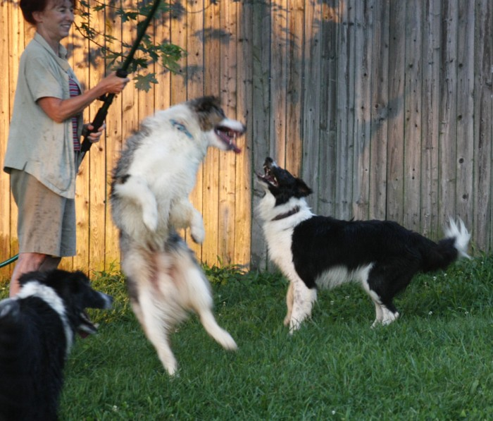 Summer fun with dogs
