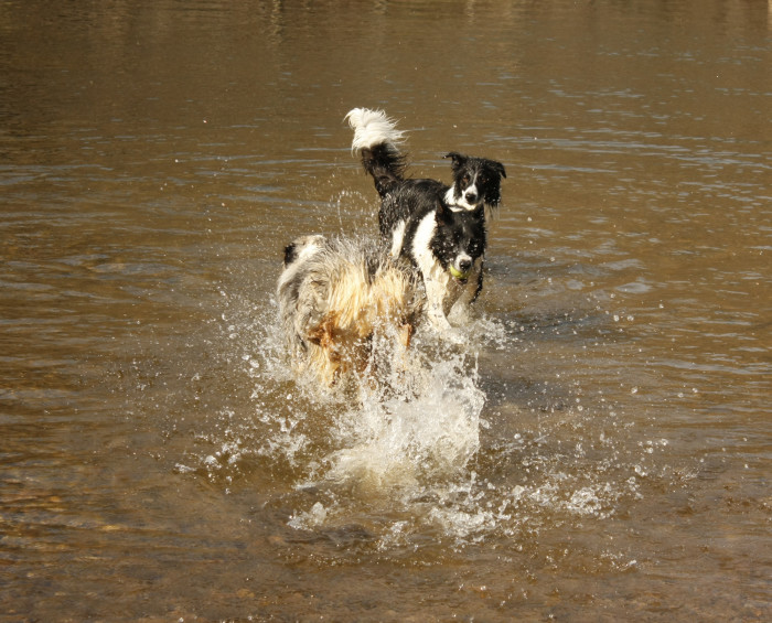 3dogs_6313